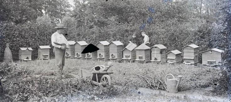 vintage beekeeping