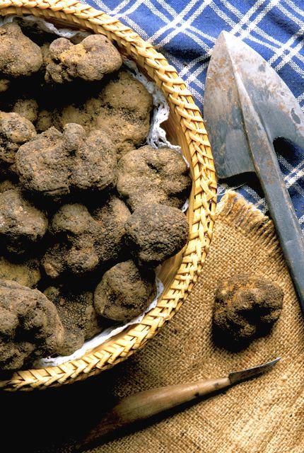 I prodotti del bosco, come il tartufo, sono parte essenziale della cultura…