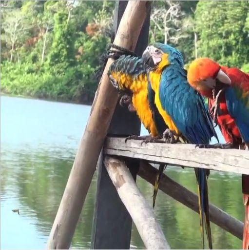 RT @quellevar En #Colombia, Amazonas es uno de los destinos mas enigmáticos y hermosos para visitar. #ViajaLatino #Travelgram #Instatravel #Travel #turismo #adondeviajar