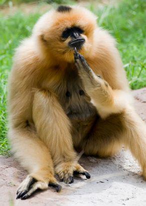 Even Monkeys Demand Equal Pay For Equal Work