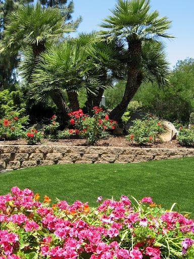 Flowers Retaining Wall Palm Trees Turf Landscape