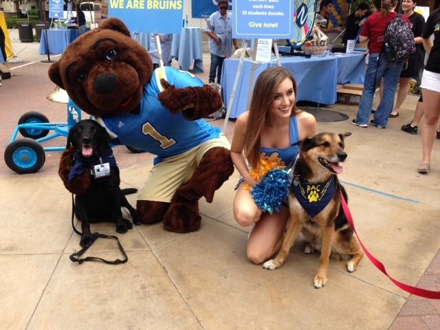 PAC Therapy Dogs at UCLA Thank You Day