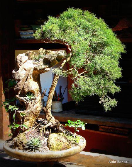 392 best bonsais images on pinterest bonsai trees for Unusual bonsai creations