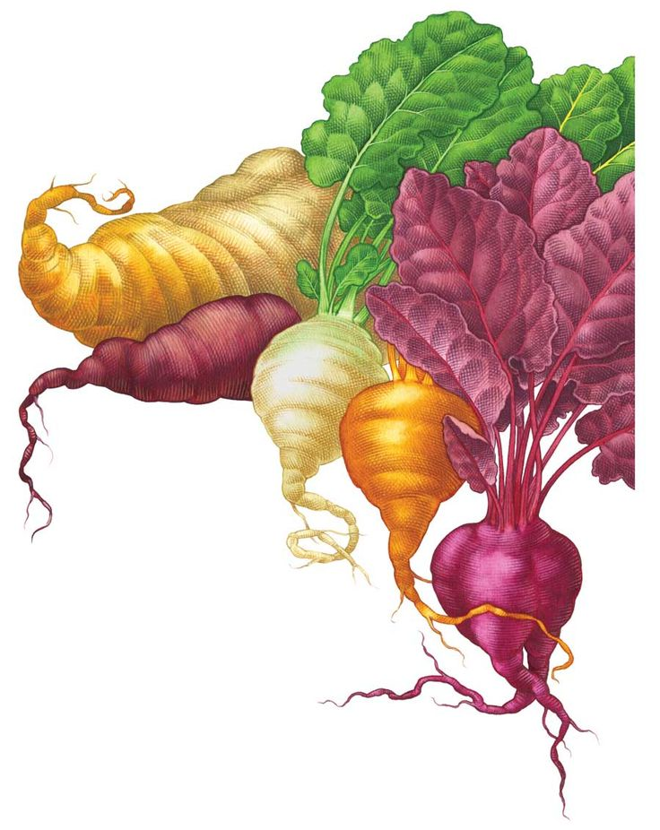 30 best images about Grow Assess Beets on Pinterest