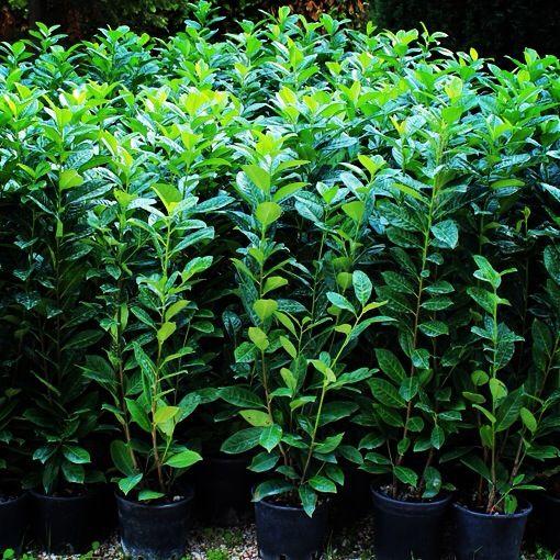 Oltre 25 fantastiche idee su piante in vaso su pinterest for Piante da orto vendita online