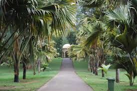 Double coconut tree way in Sri Lanka  About tours in Sri Lanka contact us: susantha2803@gmail.com