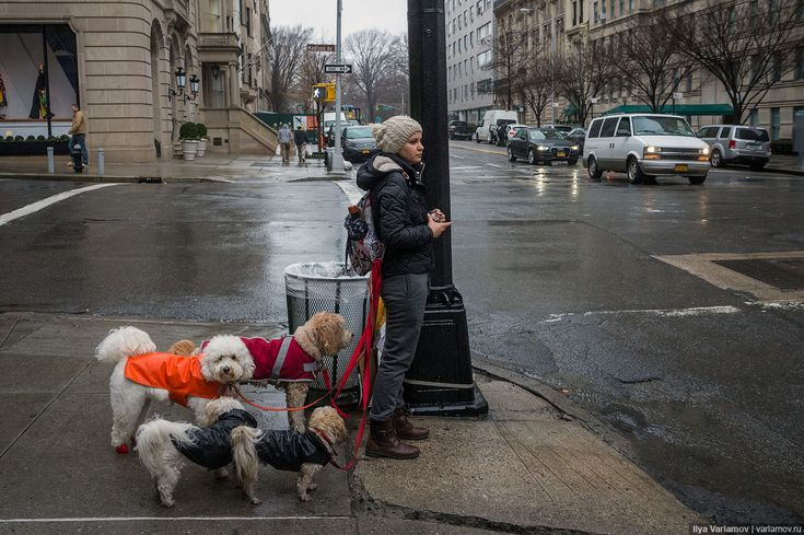 Нью-Йорк: странная мода, плохие дороги и отель будущего – Варламов.ру