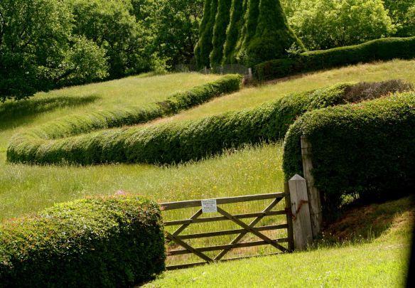 meandering hawthorn hedge in meadow