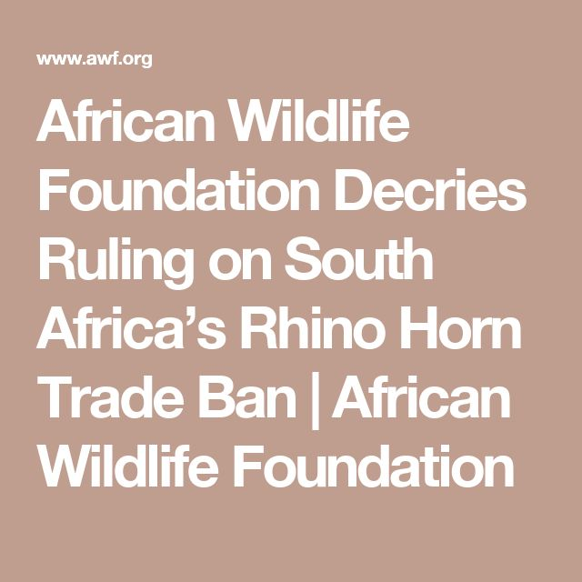 African Wildlife Foundation Decries Ruling on South Africa's Rhino Horn Trade Ban   African Wildlife Foundation