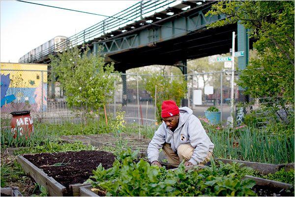 Denniston Wilks farms in East New York, Brooklyn (Photo: Todd Heisler/The New York Times) My kind of farmer.. (-;