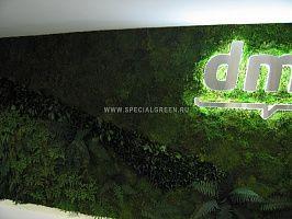 КОРПОРАЦИЯ «ДЕЛОВОЙ МИР» / DMIR.RU (Г. МОСКВА)  Зеленая стена из мха с травами от Specialgreen.ru DMIR.RU - интернет-компания, уже много лет занимающаяся развитием тематических сервисов объявлений. Компания переехала в новый офис в бизнес-центре «Лефорт» в Москве, где в 2013 году наша компания осуществила монтаж зеленой стены с травами в зоне ресепшен. В работе использовались мох пластами, кочками, хедера, эвкалипты, папоротники.