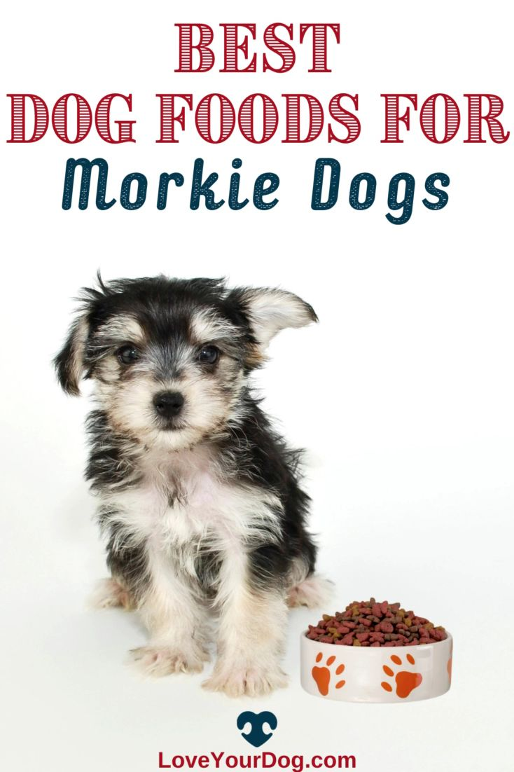 Best dog foods for morkies puppies adults seniors