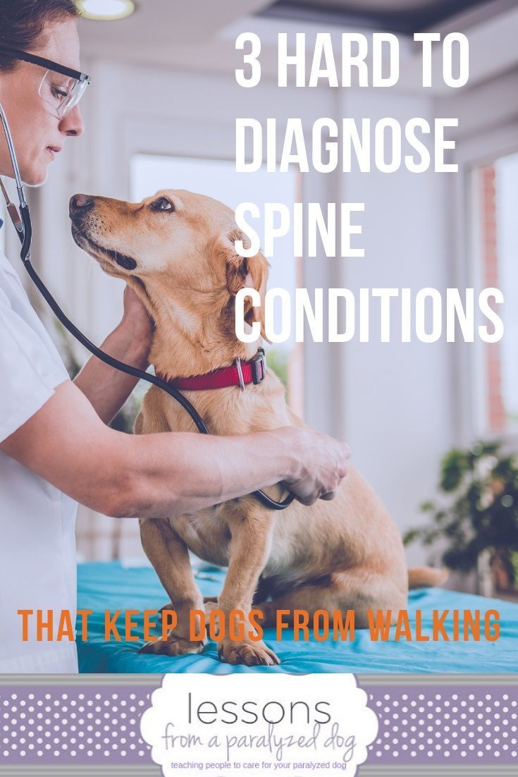 3 Hard To Diagnose Conditions That Can Paralyze Your Dog