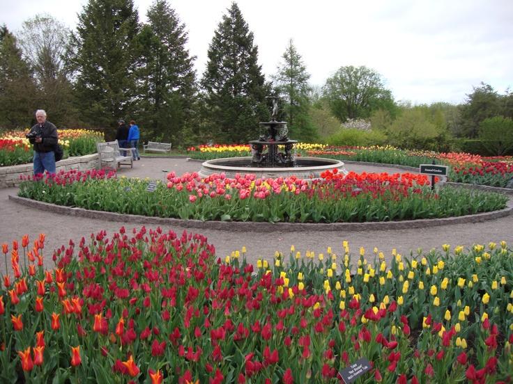 Arboretum Tulips