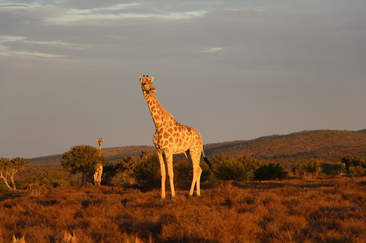 Tierwelt im Addo Elephant Nationalpark