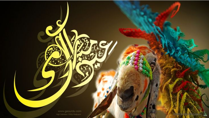 Eid Ul Adha is the (Three-Day) Islamic festival that marks the Hajj pilgrimage and Qurbani, to commemorate the sacrifice the Prophet Ibrahim (alaihis salaam) was willing to perform of his son Ismail (alaihis salaam) for Allah, who spared his son by sending down a ram to take his place.