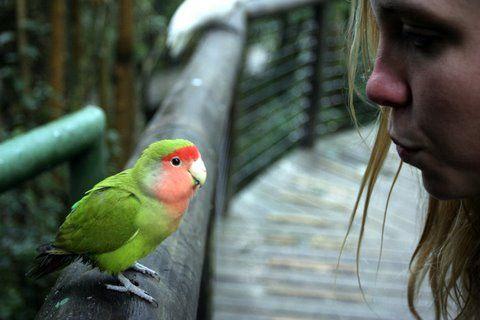 Birds of Eden, Plettenberg Bay, South Africa