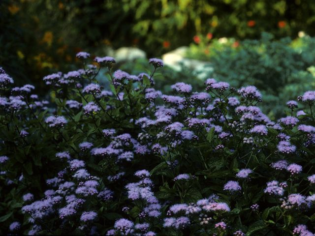 25  best shade plants for austin tx  zone 8  images on pinterest