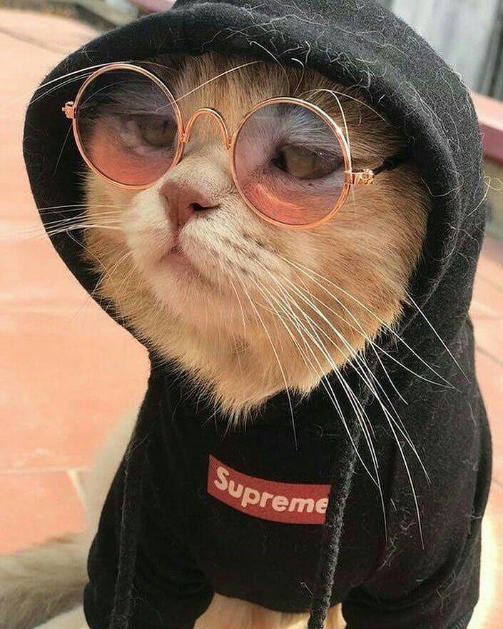 фото смешных котиков на аву того, научитесь собирать