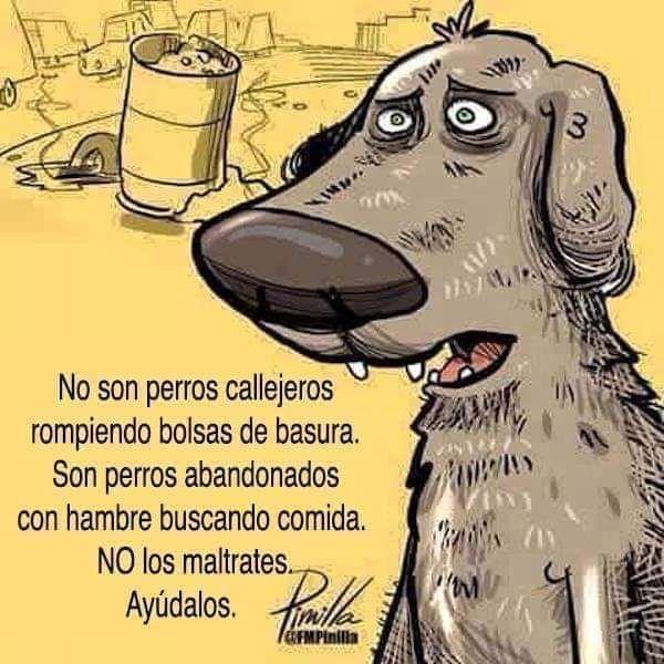 Animalista Perros Abandonados Imagenes De Perros Perro Callejero