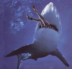 Des requins qui utilisent Twitter à l'insu de leur plein gré pour prévenir les baigneurs de leur présence, évitant ainsi une éventuelle attaque de requin.