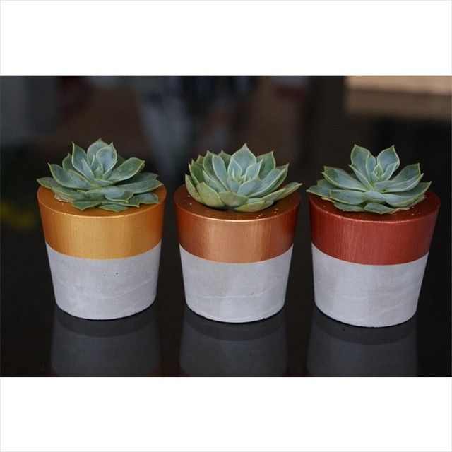 P L A N T E R S // Beautifully finished trio of mini planters $25 // shop www.tleafcollections.com.au #miniplanters #succulents #succulentholders #copper #bronze #gold #giftideas #cementplanters #interiordesign #homeinspo #tleafcollections #belushihm