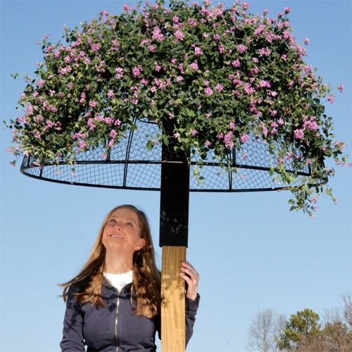 Umbrella Planter At the center is a round basket for growing 2, 3, or even more vining plants. I have an upside down papasan chair on a post in my yard and grow morning glories on it. Looks so pretty!