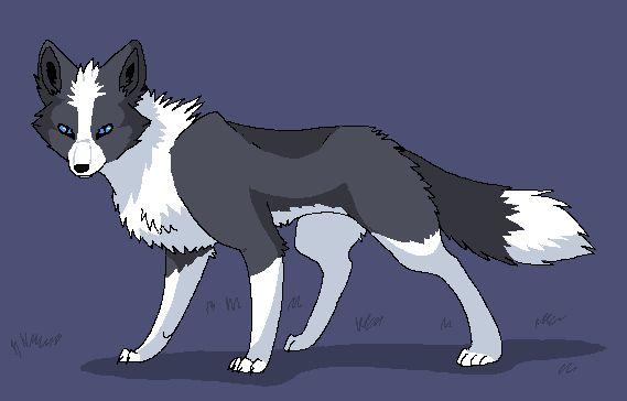 Domesticated Silver Fox by Ash-Dragon-wolf.deviantart.com