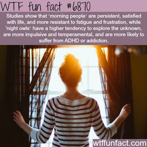 Morning people - WTF fun fact