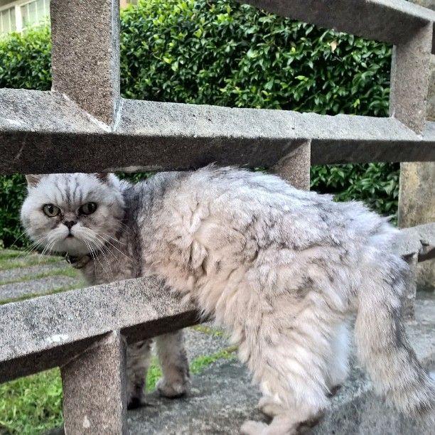 Ma che vuoi? #gatto #cat #animalidomestici