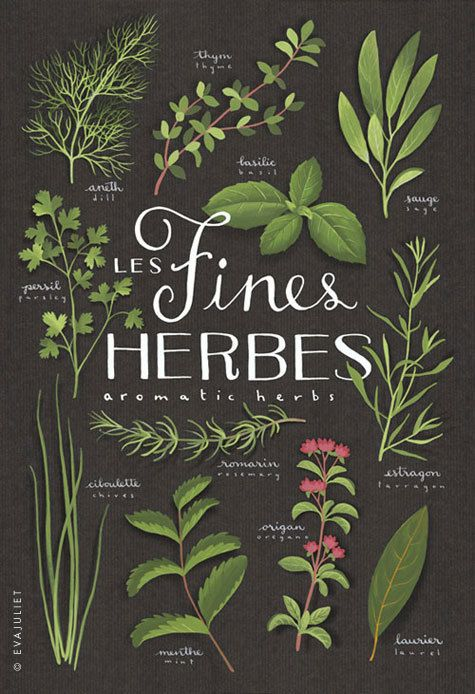 Fines herbes // Aromatics Culinary herbs bilingual print 13x19 // Botanical collection // $39.00 // evajuliet.etsy.com