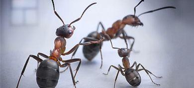 Πώς θα απαλλαγείτε από τα μυρμήγκια;
