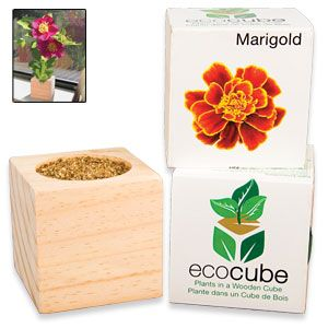 "Ecocube Marigold - Grow beautiful flowers from this eco-friendly wood planter! Already filled with seed and fertilizer, so you just add water and sunshine. Plus, cube can be buried outdoors, giving your plant a permanent home. Starts growing in 6-8 days; starts blooming in 7-8 weeks. 3""Cube. (Product Number SM5475) $9.98 CAD"