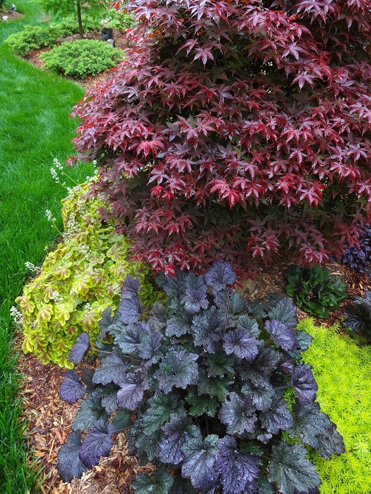 Acer palmatum 'Rhode Island Red'.  David's garden in North Carolina, Day 2   Fine Gardening