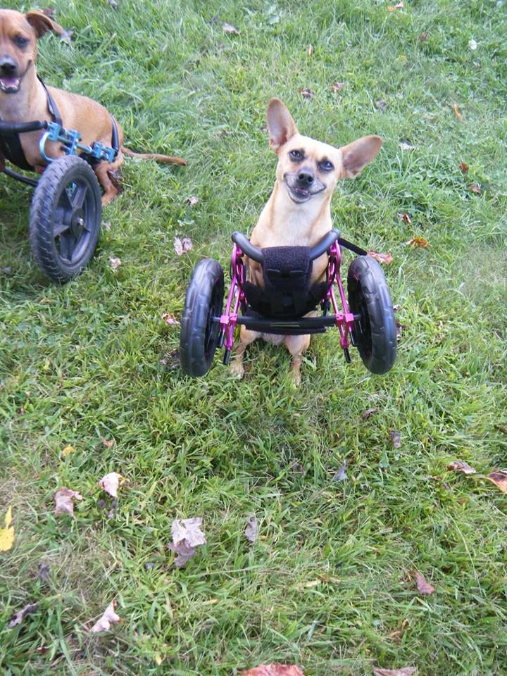 Willa is all smiles while showing off how light her wheels are.
