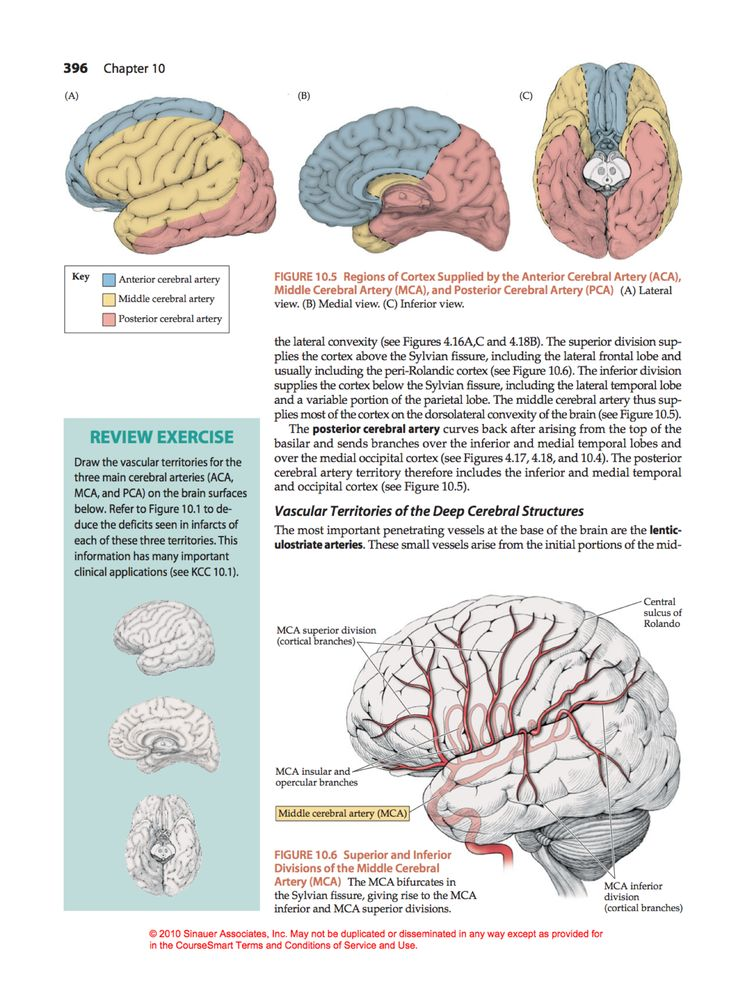 49 best neurosurgery images on Pinterest | Branches, Eggplant and ...