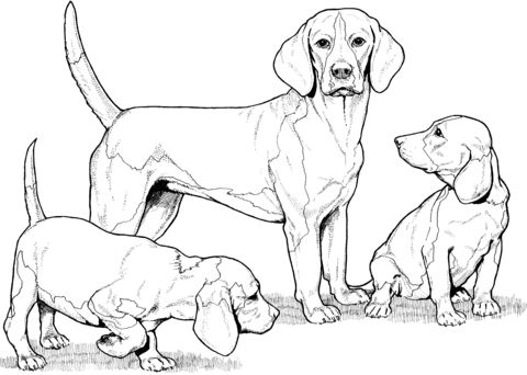 101 best Paw prints images on Pinterest Animal tattoos, Tattoo - new coloring pages beagle puppies