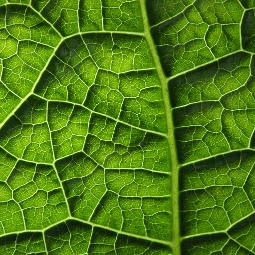 Tactile texture - physical texture on a design that can be touched and felt. In this example, the natural texture of a leaf.