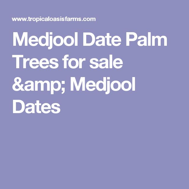 Medjool Date Palm Trees for sale & Medjool Dates