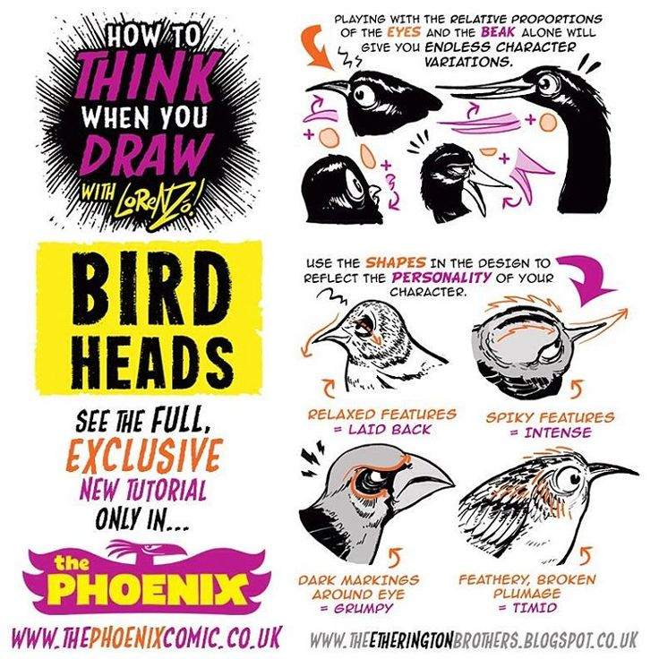 Draw - Birds heads Here's a little taster of my new How to Think when you Draw BIRD HEADS tutorial, which appears in The Phoenix Comic this week!