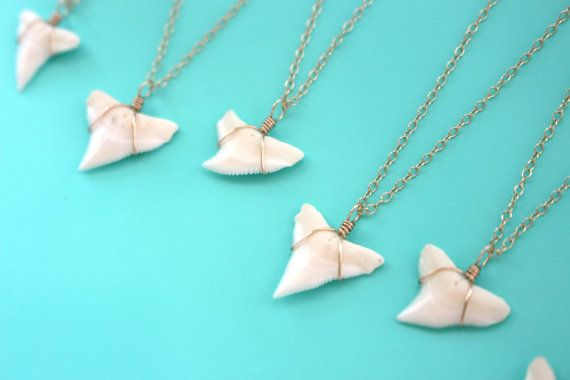 Genuine Shark Tooth Necklace Gold Shark Tooth by FiveOfMine