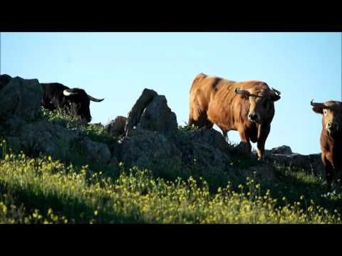 Vidéo des novillos de Murteira Grave de Mugron