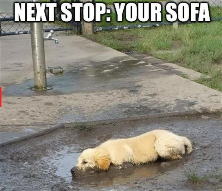 Large collection of funny animals on our site funnyspaces.com