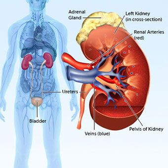Kidney Failure: Signs, Symptoms, Causes & Stages
