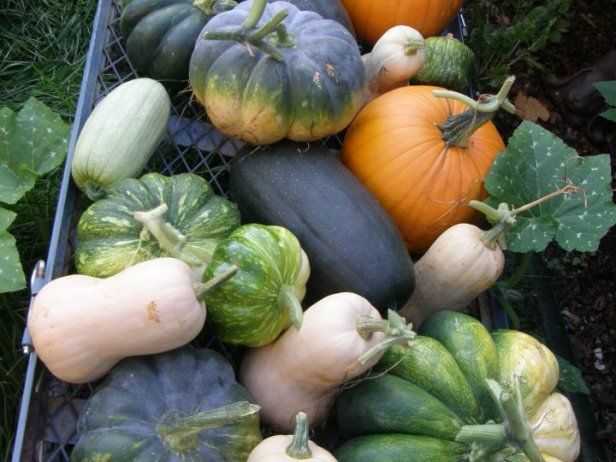 Learn about different types of winter squash from the experts at HGTV Gardens. Discover how easy it is to improve winter squash flavor.