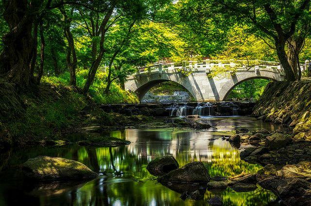 Summer Reflections in Seonunsa Temple – South Korea