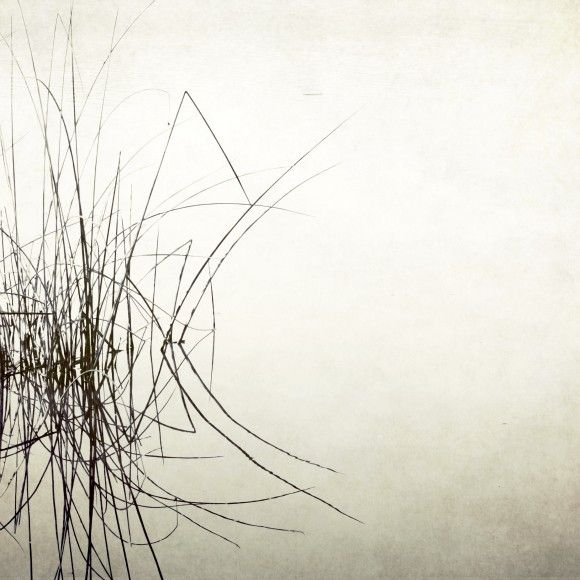 Palindrome - Black and White minimalist photography - Reed grasses reflected in a still lake