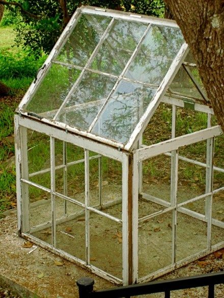 Repurposed old windows find a new green home. Beautiful and practical and cheap!