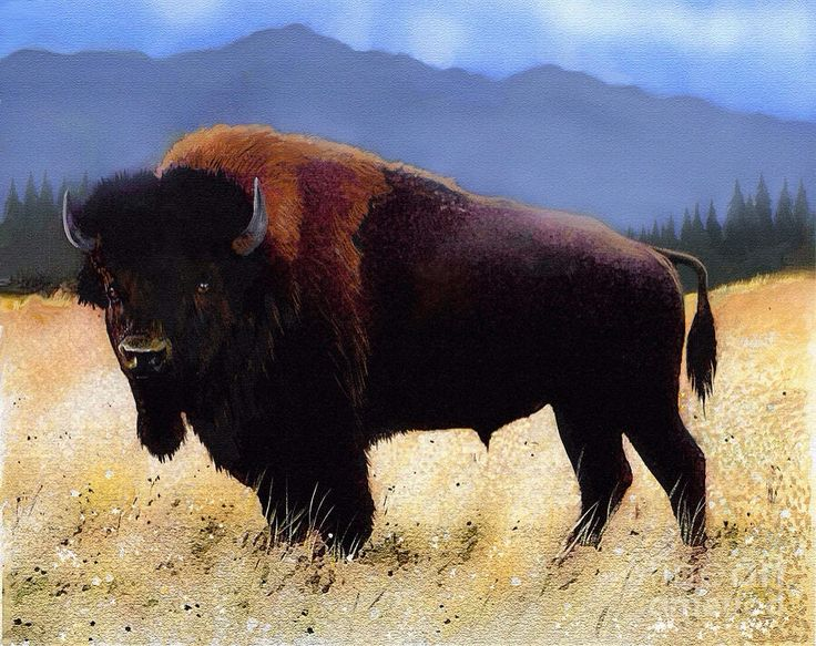 Great Plains Buffalo Share Buffalo Art Bison Art