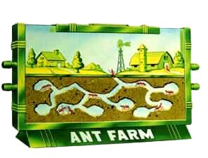 Ant Farms were a decorative piece as well as entertainment. It was captivating to watch a colony of ants build their tunnels and rooms. Ant Farms were a fad in the 1950s.